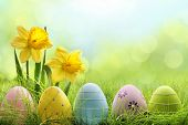 stock photo of daffodils  - Easter eggs hiding in the grass with daffodil flower - JPG