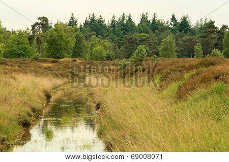 Stream Running Through Heathland
