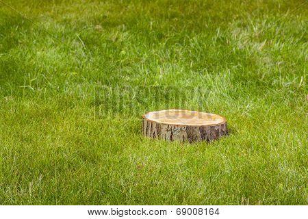 tree stump on the green grass