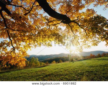 Beautiful Landscape And Trees