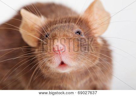 Mouse portret