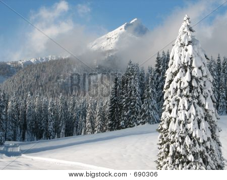 Lonesome Tree Covered With Snow In Winter Time