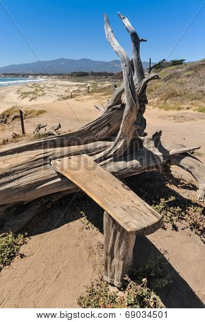 Tree Trunk With Built In Bench Of Wood