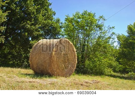 Round hay bale and bushes in Abruzzo countryside, Italy