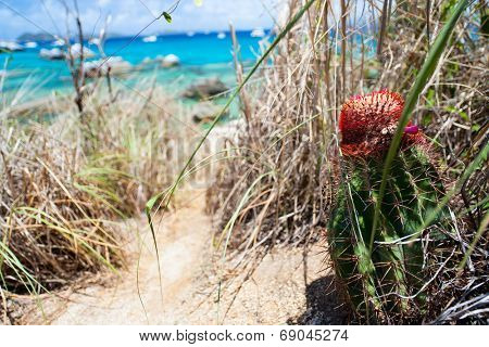 Unique red furry spiked top of Turks Cap or Turks Head Cactus grow on cliffs overlooking tropical ocean on the island of Virgin Gorda BVI in Caribbean