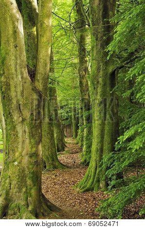 Beech Tree Avenue