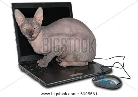 Naked Cat On Laptop