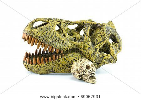 Human Skull And dinosaurs T-Rex Isolated On White.