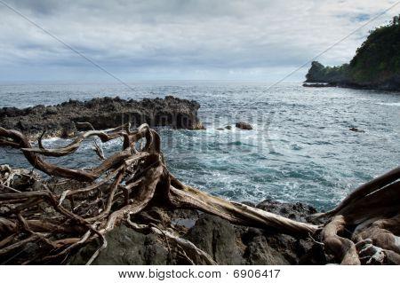 Twisted Coastline