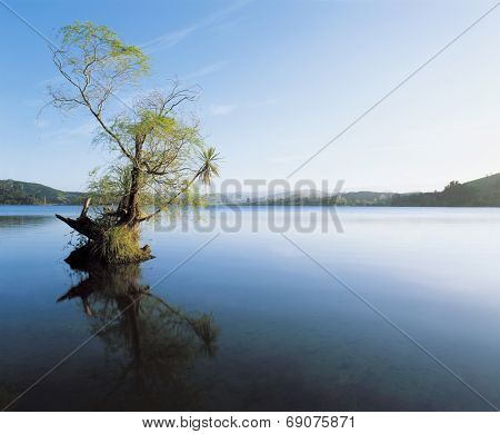 Tree in Lake Reflecting on Still Water