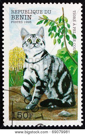 Postage Stamp Benin 1998 Striped Shorthair Cat