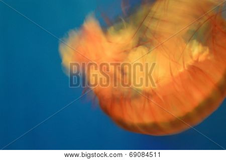 Abstract jellyfish