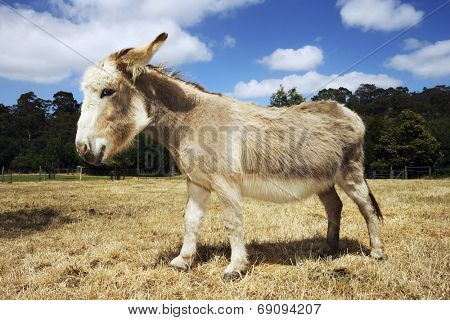 Side view of a donkey walking in field against trees and clouds