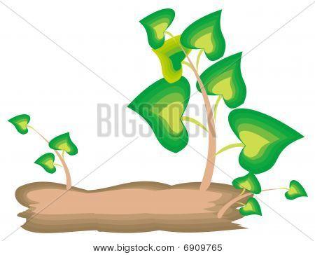 Tree,leaves