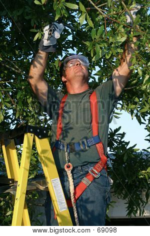 Tree Surgeon At Work (Color Corrected)
