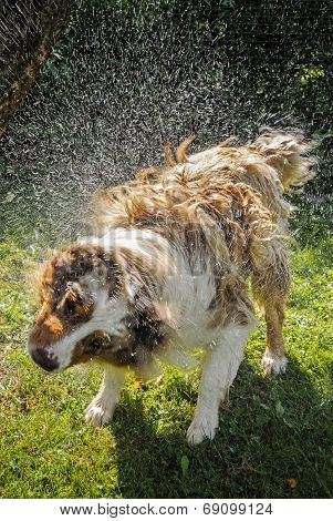 Dog Splash Out Water