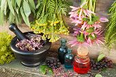 stock photo of tansy  - bunches of healing herbs on wooden wall mortar with dried plants and glass bottles herbal medicine - JPG