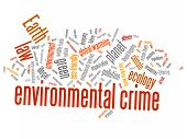 picture of deforestation  - Environmental crime  - JPG