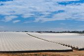 picture of mater  - A field of crops covered by white plastic materal - JPG