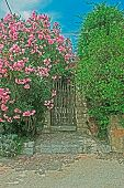 pic of oleander  - wooden gate and pink oleanders on a clear day - JPG