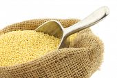 pic of millet  - Millet in a burlap bag with an aluminum scoop on a white background - JPG