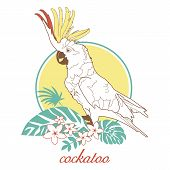 image of palm cockatoo  - Vector illustration for printing on paper and fabric - JPG