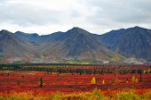 pic of denali national park  - Beautiful Fall Colors at Denali National Park in Alaska - JPG