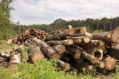 foto of deforestation  - Large Lumber Pile from deforested rural area - JPG