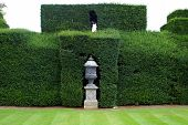 stock photo of plinth  - Decoration of sculptured urn on a plinth in a sculptured hedge.