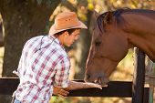 stock photo of feeding horse  - cowboy feeding a horse out of hand - JPG