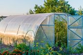 pic of early spring  - the arch of the greenhouse tomato seedlings in early spring