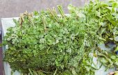 stock photo of malunggay  - Bunches of Malunggay leaves  - JPG