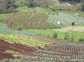 stock photo of cruciferous  - Farmland hills ladder cruciferous garden crops Valley area - JPG