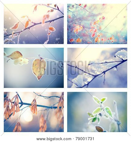 Frozen Nature. Beautiful collage of winter floral backgrounds. Winter nature background. Frozen branch with leaves closeup. Abstract Art design. Shallow DOF, soft focus