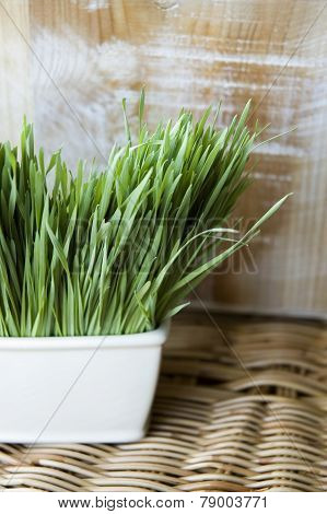Wheatgrass Natural Concept