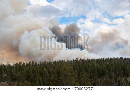 Forest Fire Clouds With Flames In Yellowstone