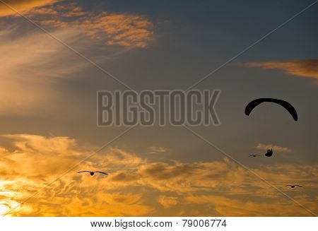 A para glider soars into the sunset