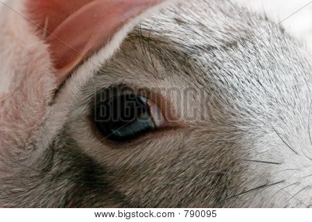 close up grau Rabbit head