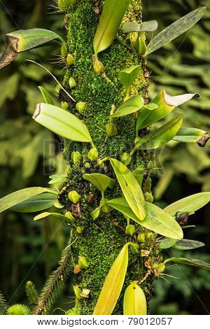 Green Jungle Woody Plant