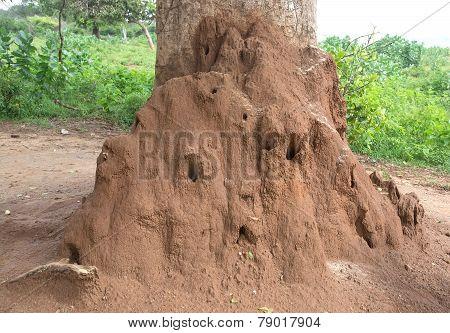 Termite Mound Nest