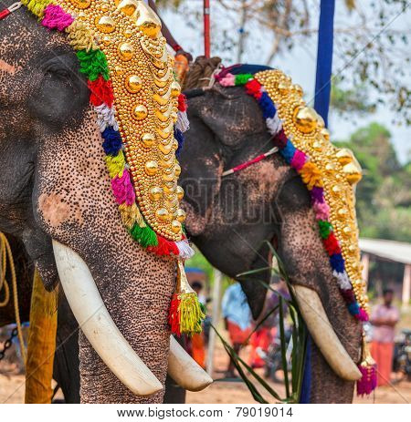 Decorated elephants in Hindu temple at temple festival, Kearla, India