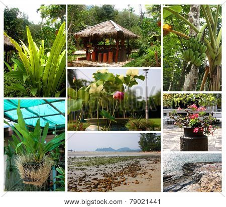 Tropical Plants And Landscapes