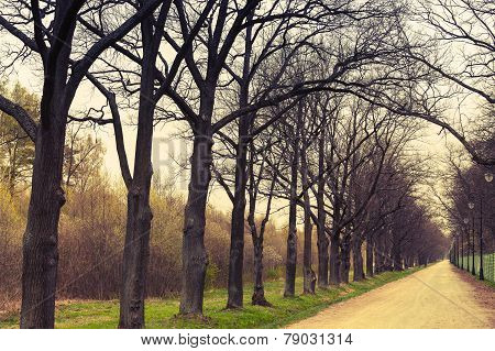 Autumnal Park. Empty Alley Perspective With Leafless Trees