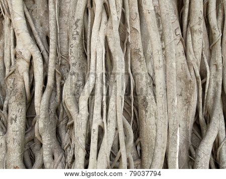 Wooden Roots