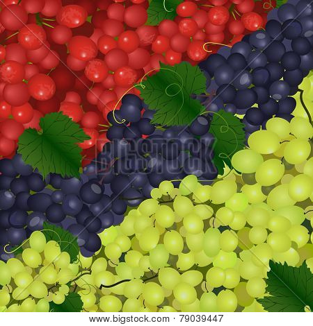 Vector Background Of The Different Types Of Grapes