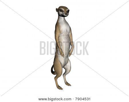 Illustration Of A Meerkat