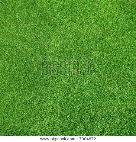Wery detalhada textura de grama