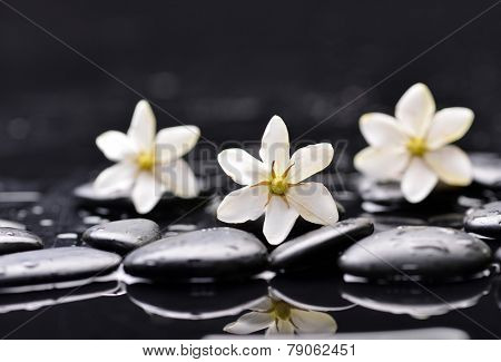 Still life with white gardenia with zen stones