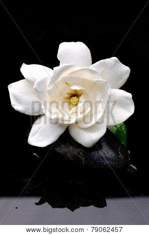 beautiful gardenia with zen stones on wet background