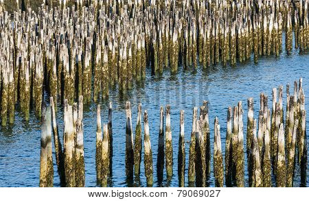 Blue Water Through Old Wood Pilings